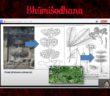 borobudur writers & cultural festival 2020 proses identifikasi flora di candi Borobudur